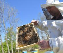 ЗС Андрей Стойчев - Селището на пчелите